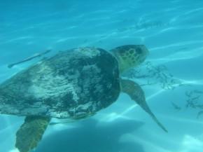 Islamorada snorkeling adventure